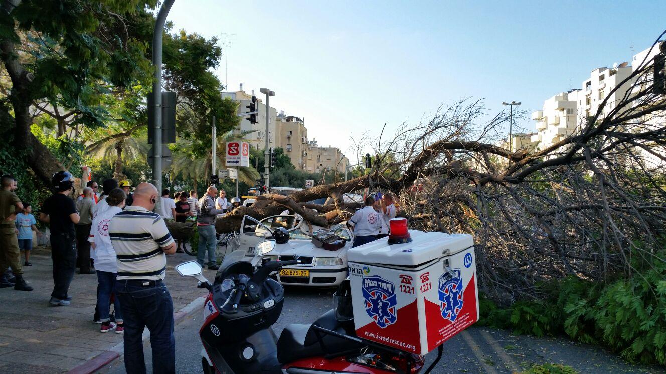 עץ קרס על מונית - צילם יוני עוזיהו 24 (10)