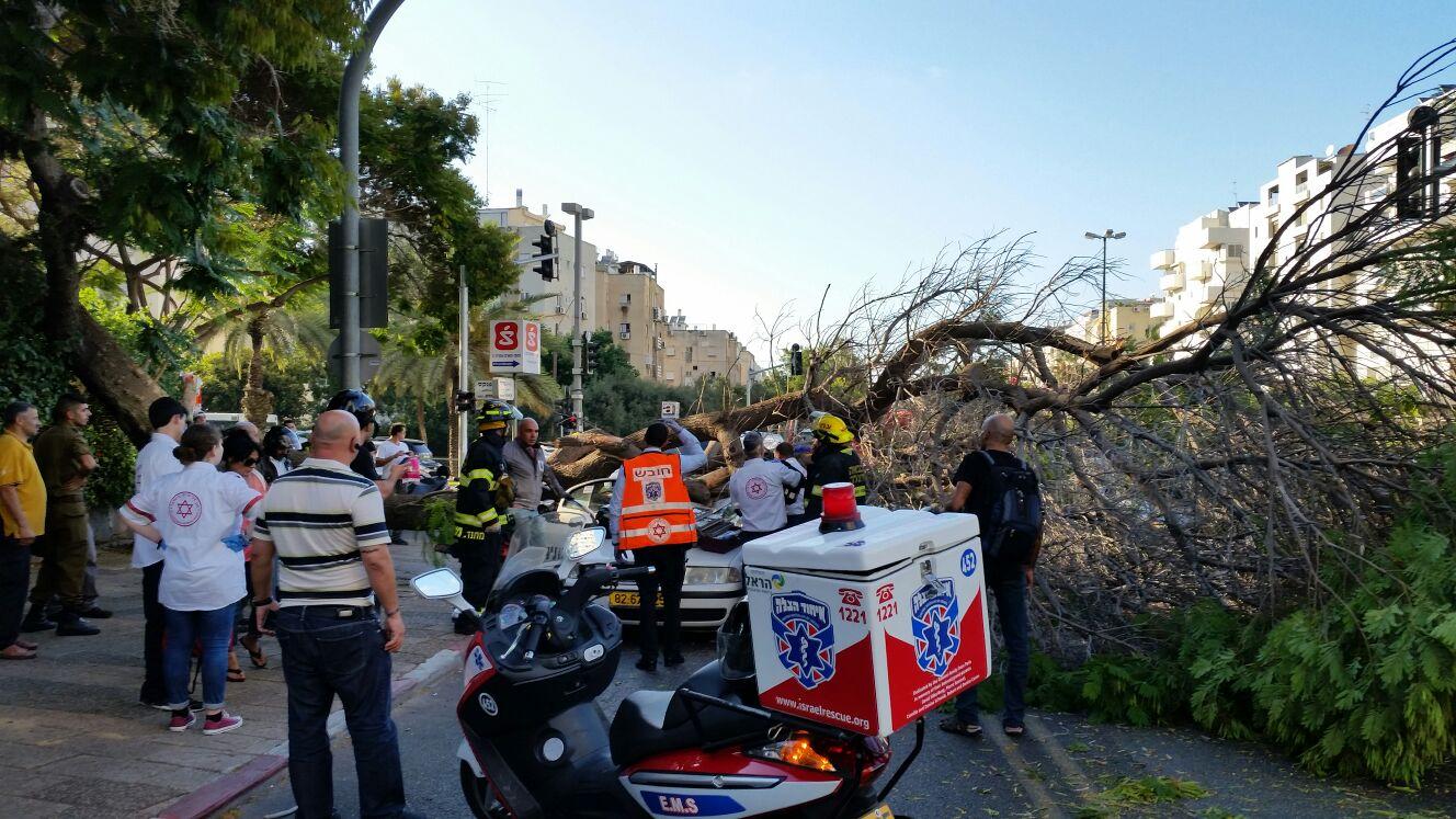עץ קרס על מונית - צילם יוני עוזיהו 24 (2)