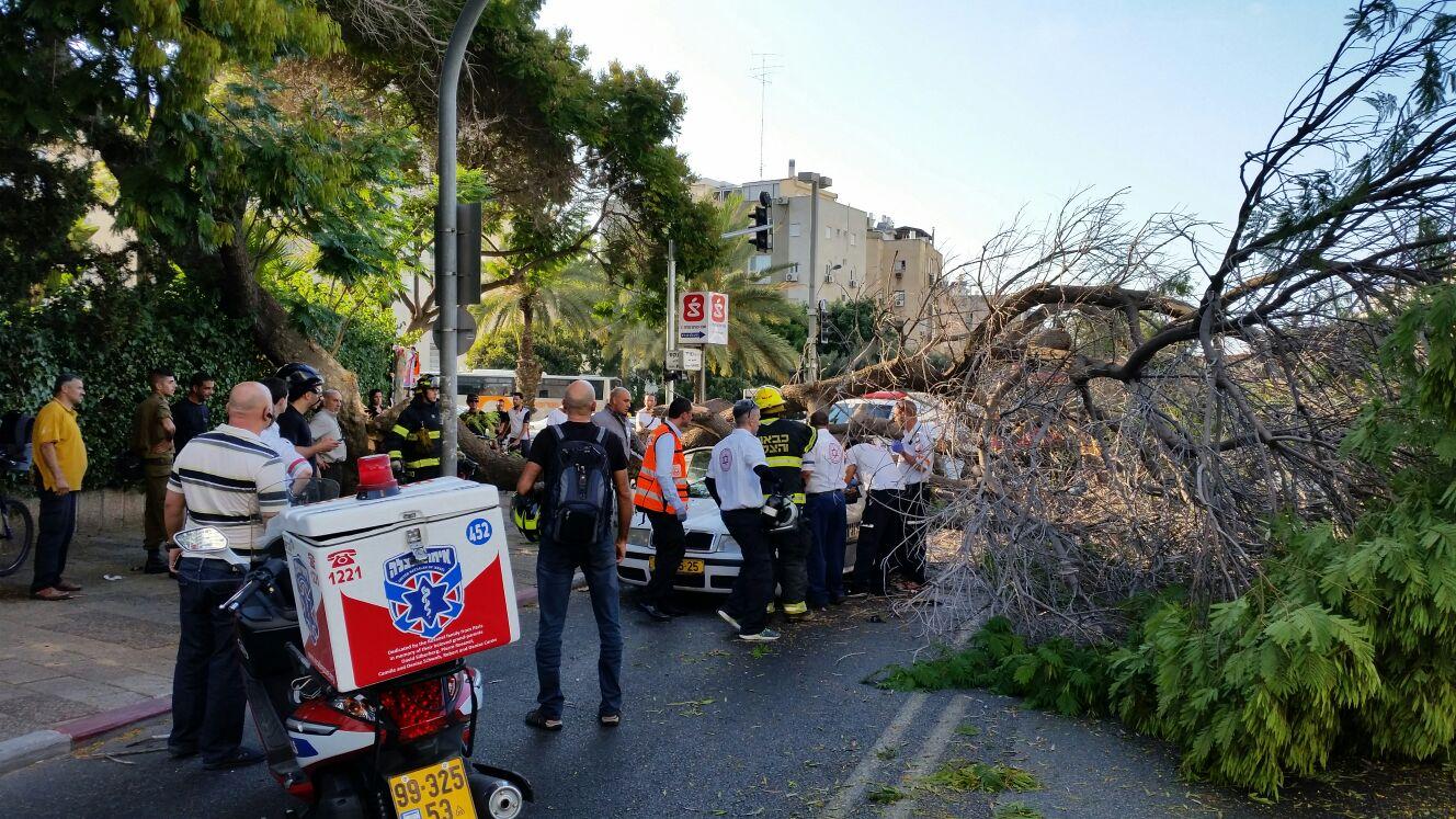 עץ קרס על מונית - צילם יוני עוזיהו 24 (3)