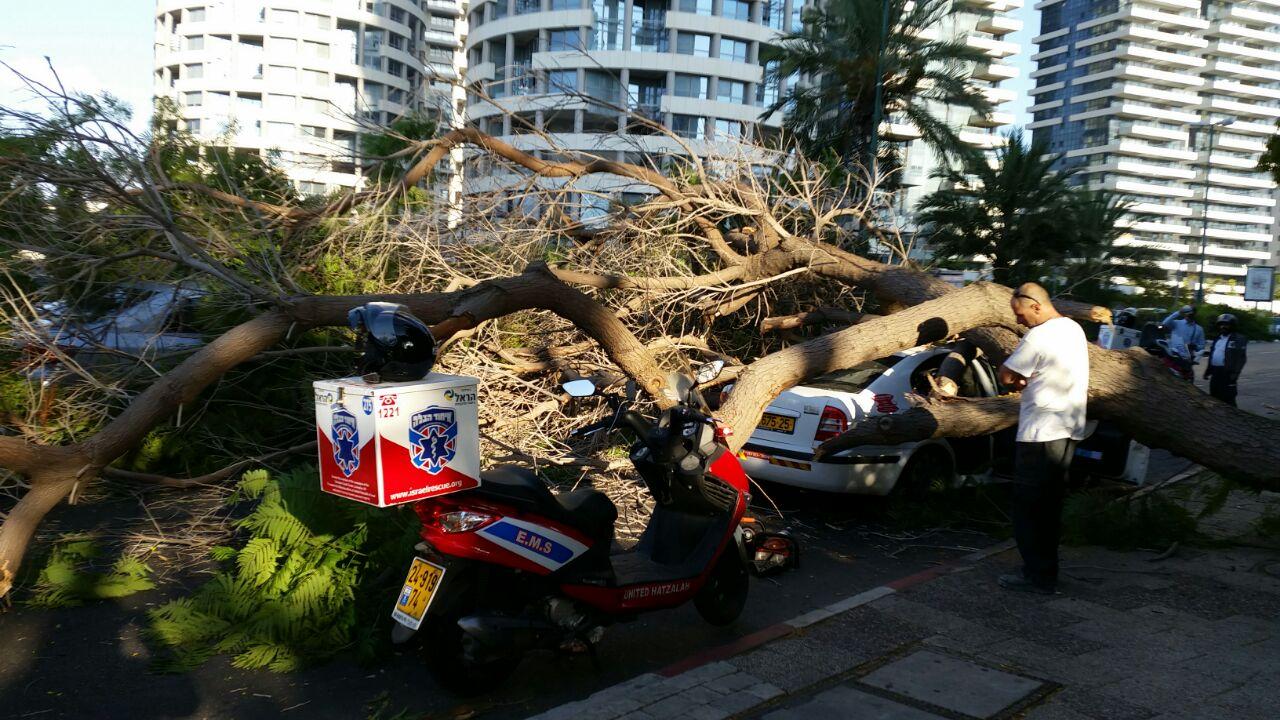 עץ קרס על מונית - צילם יוני עוזיהו 24 (5)