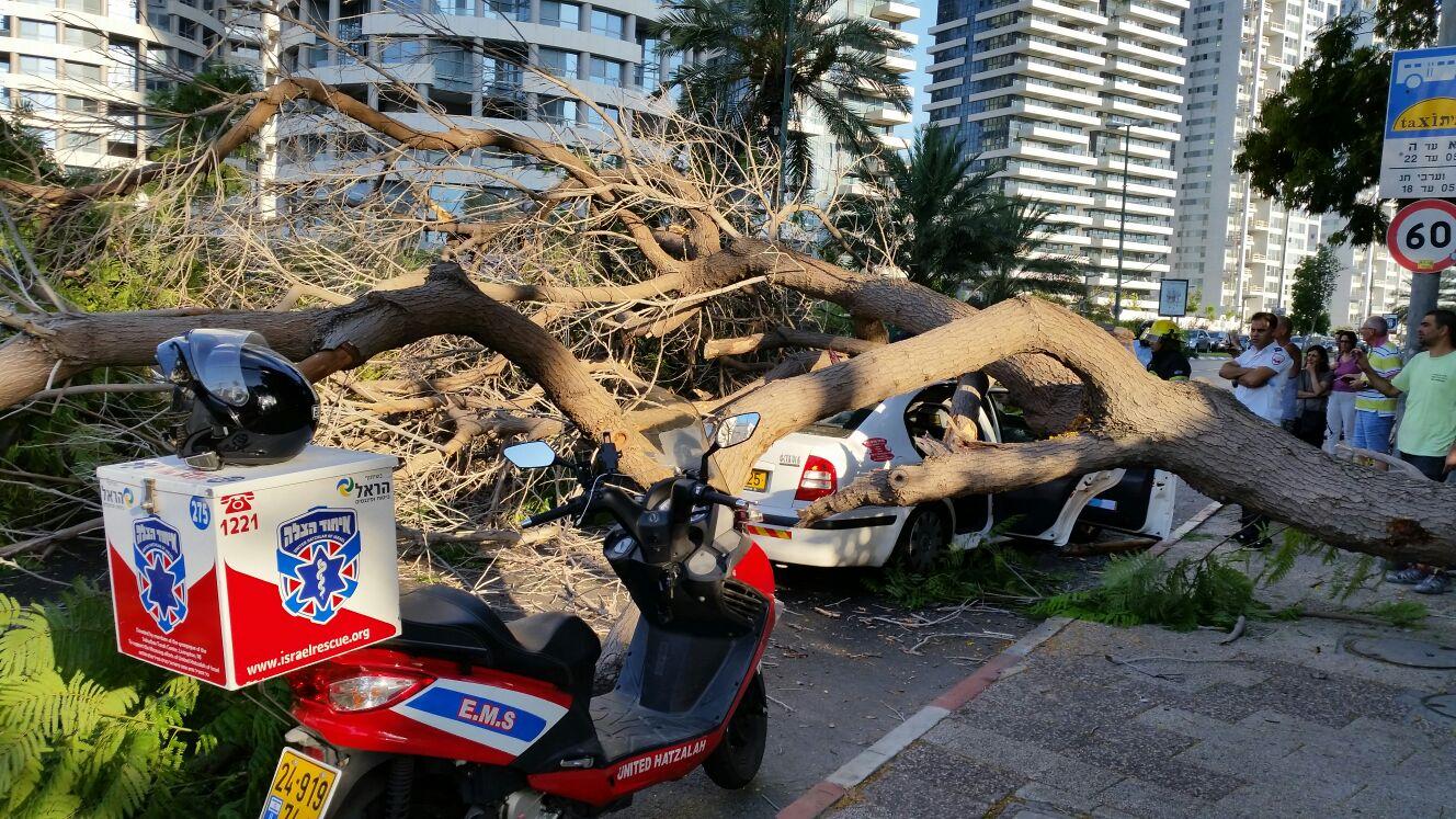 עץ קרס על מונית - צילם יוני עוזיהו 24 (7)