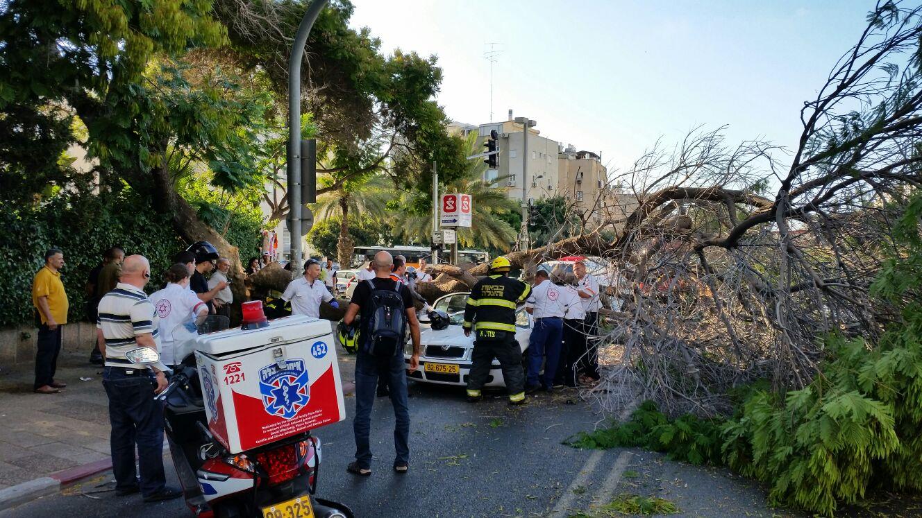 עץ קרס על מונית - צילם יוני עוזיהו 24 (8)