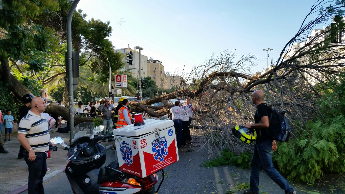 עץ קרס על מונית - צילם יוני עוזיהו 24 (9)