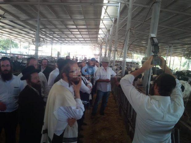 פרות המבשר 4