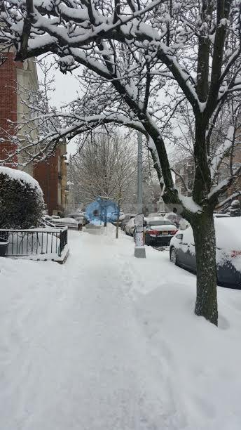 פורים בשלג צילם אבי חן ואבי רט חדשות 24 (2)