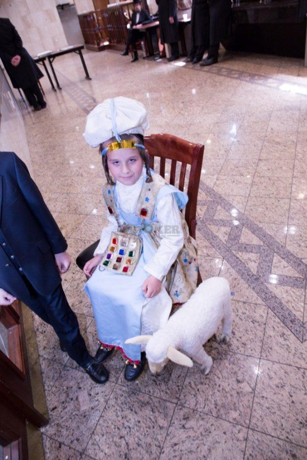 מעמד יבואו טהורים וחומש סעודה בת''ת דרכי אבות צאנז במאנסי בראשות מורינו הגר''א שליט''א (8)