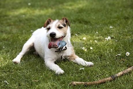 חיסונים מומלצים לכלבים